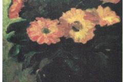 Fiori - 1964